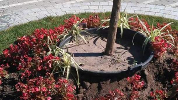 Після святкування Хрещення Русі із столичного парку прибирають дерева