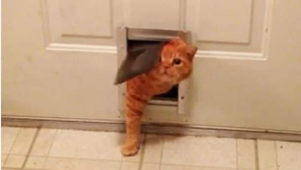 Котик пролазить у двері.