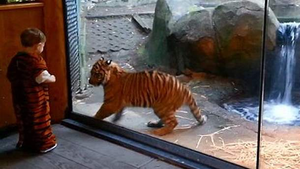 Малюк і тигреня