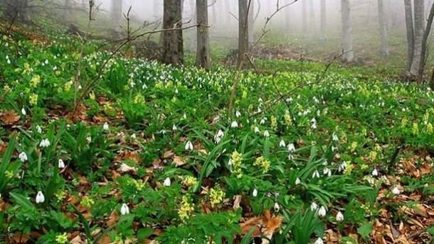 Кримський ліс