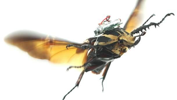 Подопытный жук