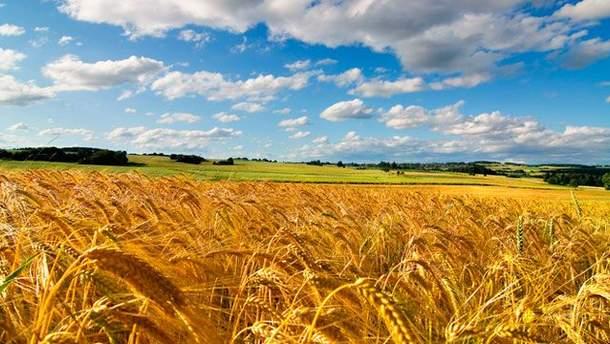 Павленко: И.о. главы Государственной инспекции сельского хозяйства находится на рабочем месте