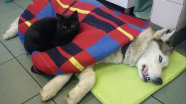 Кот лечит объятиями