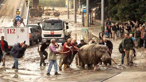 Люди спасают животных из зоопарка Тбилиси
