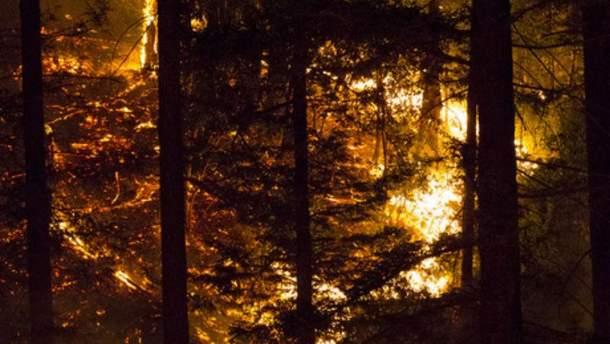 Палаючий ліс
