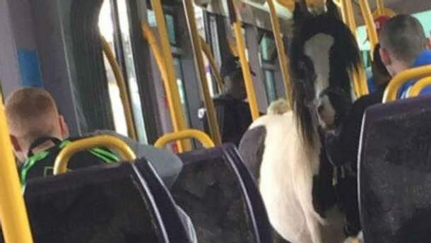 Кінь у трамваї
