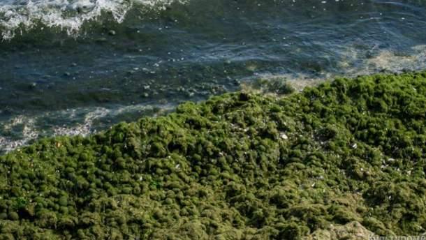 Зелень в Одесі