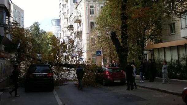 Дерево впало у центрі Києва