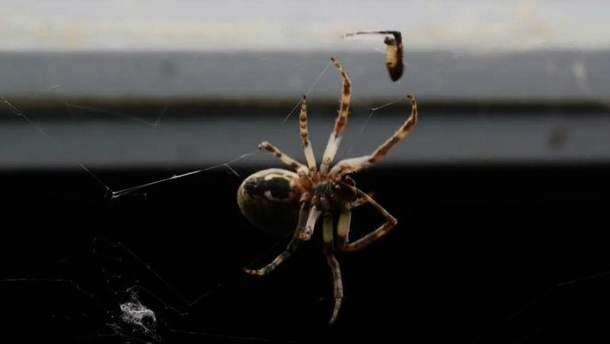 Тисячі павуків оселилися на мосту