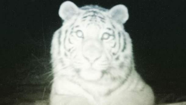 Фотофакт: тигр зробив селфі