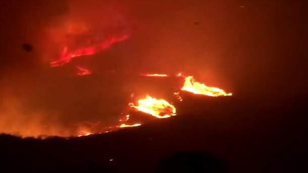 Лесные пожары в Австралии