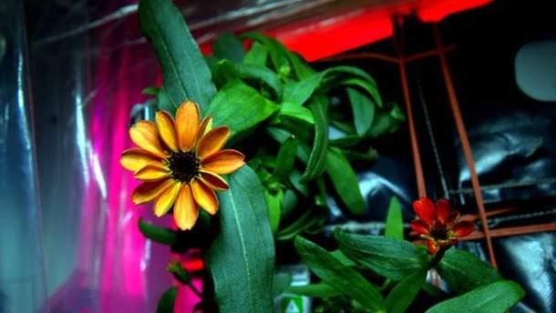 Квітка на МКС
