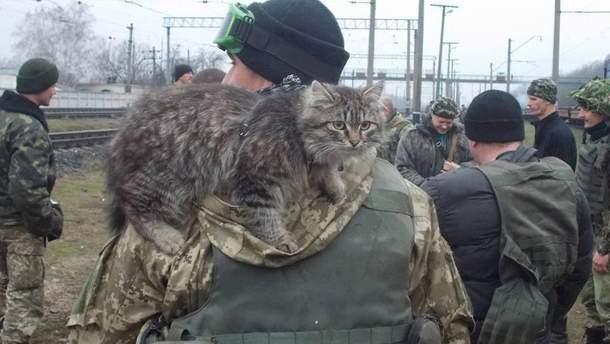 Боец с котом