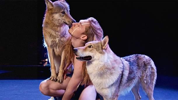 IVAN та вовки