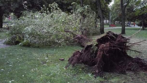 Ветер вырвал деревья с корнем