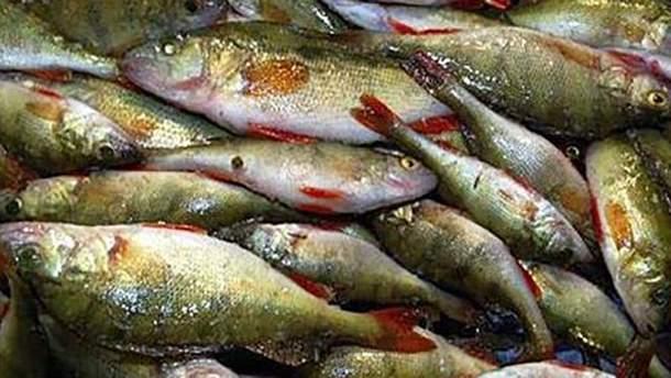 Мертва риба