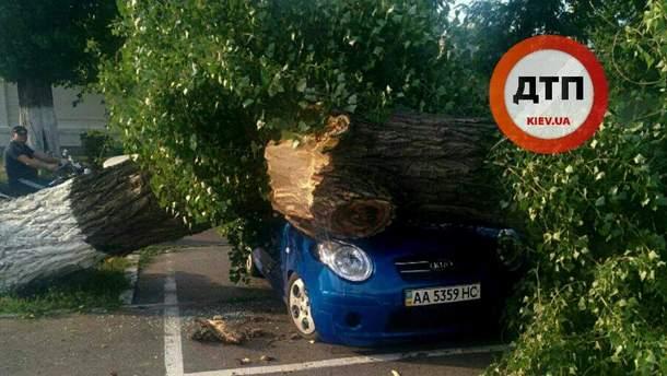 На автомобіль впало дерево у Києві