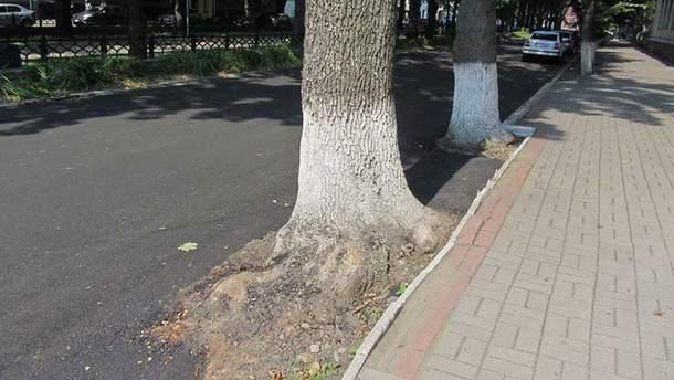 """Деревья оказались в """"асфальтной ловушке"""""""