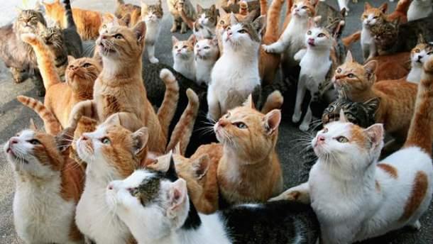 Любите видео о котиках?