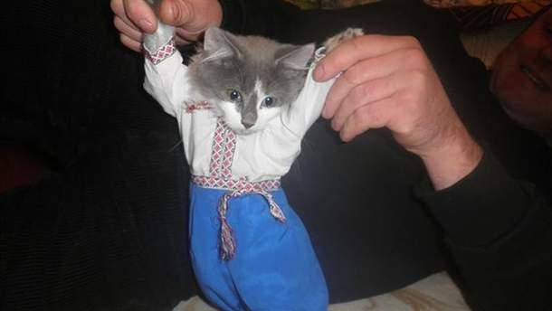 Кот-патриот есть и на передовой (иллюстрация)