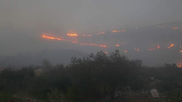 Жахливі пожежі в Ізраїлі