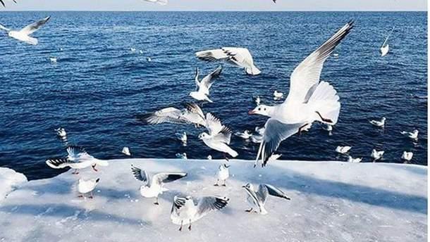 В Одесі зимова казка