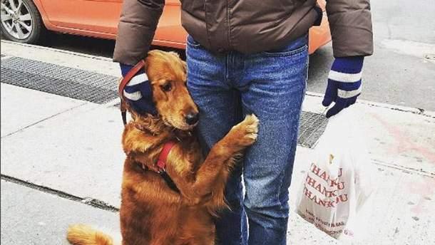 Собака, яка любить обійматись