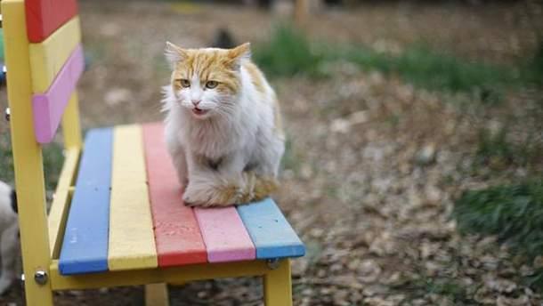 У Києві котів можуть визнати частиною екосистеми міста
