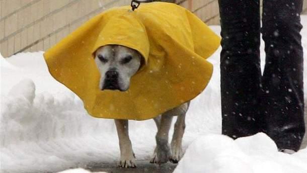 Печальный пес в снегу