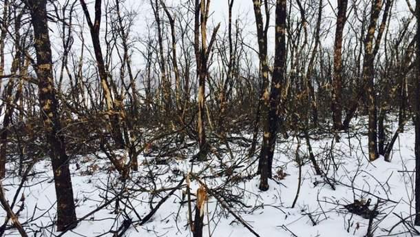 В лесу в районе Светлодарской дуги не осталось ни одного уцелевшего дерева