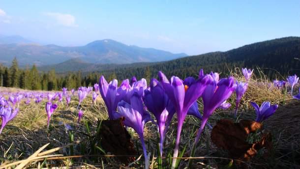 7 туристичних місць в Україні, які розквітають навесні