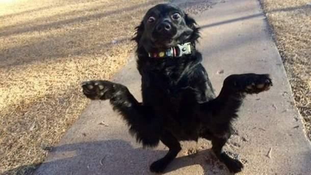 Цей милий пес підкорив мережу