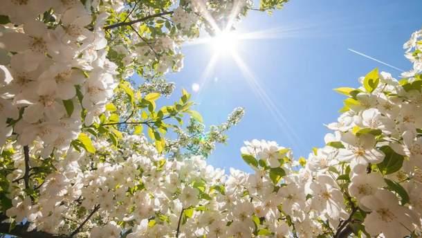 В первые дни марта будет по-весеннему солнечно