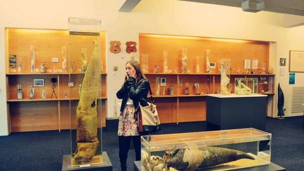 Найдивніші музеї світу