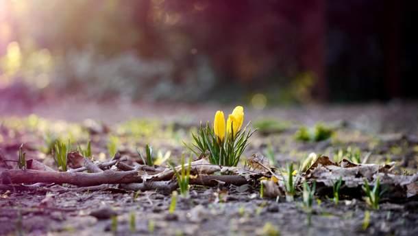 У березні було аномально тепло