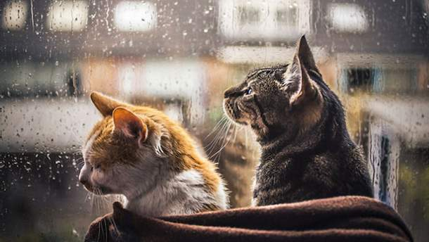 В Україну завітають весняні дощі