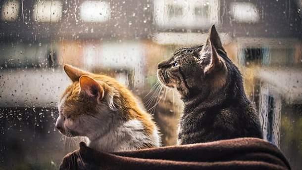 В Украину придут весенние дожди
