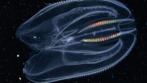 Гребенчатая медуза была первым животным на Земле