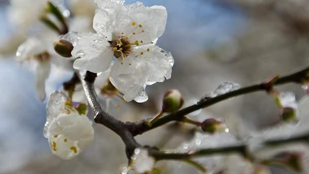 Заморозки весною