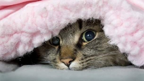 Буде холодно