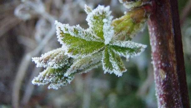 15 квітня можливі заморозки