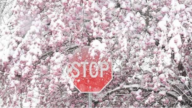 Снігом у квітні вже нікого не здивуєш