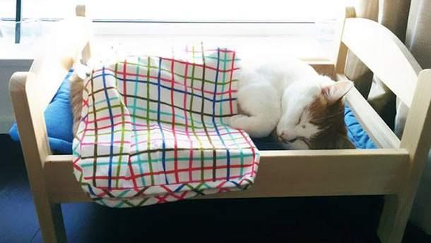 Кроватки для кошек