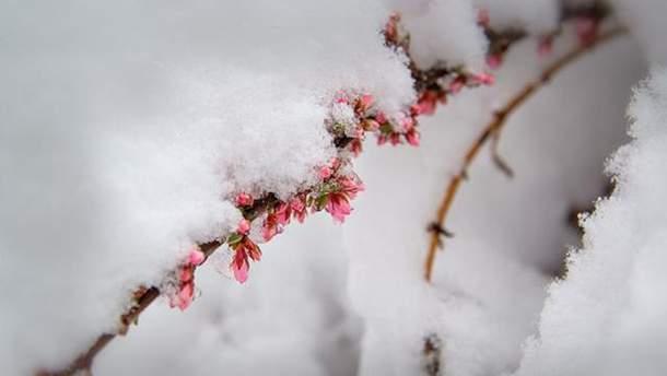 Погода на 20 квітня: стало відомо, коли потепліє