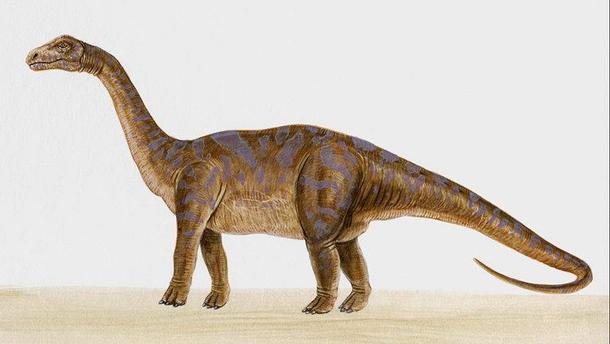 Ученые нашли новый вид рептилии