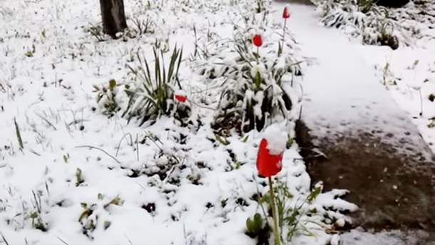 Негода дісталася Криму: все в снігу