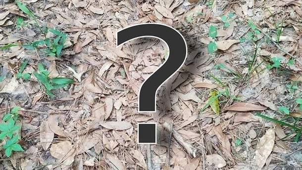 Де замаскувалася змія?