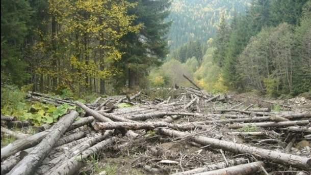 Як повернути вирубаний український ліс