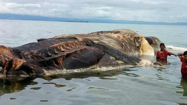 Невідома морська істота