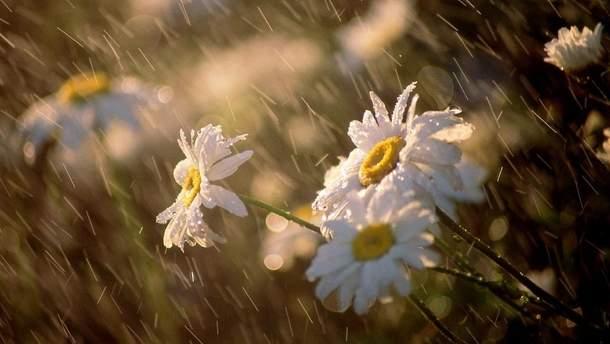Погода на 16 мая: в Украину возвращаются дожди